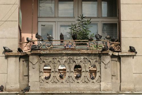 Pigeons sur un balcon en pierre