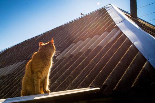 Chat regardant un oiseau sur un toit