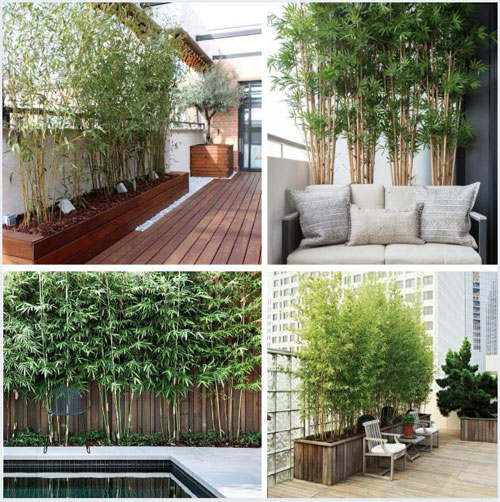 bambou-brise