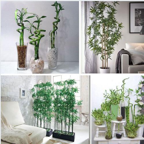 bambou-pots