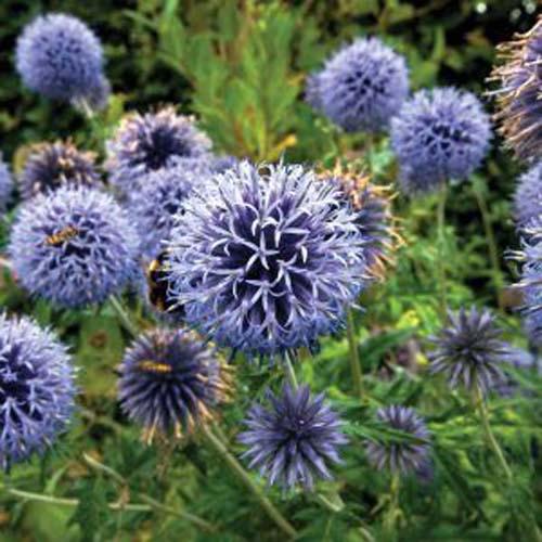 Boule azulée
