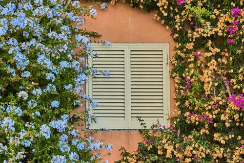 facade_vegetale1