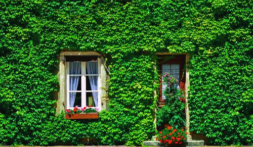 facade_vegetale3