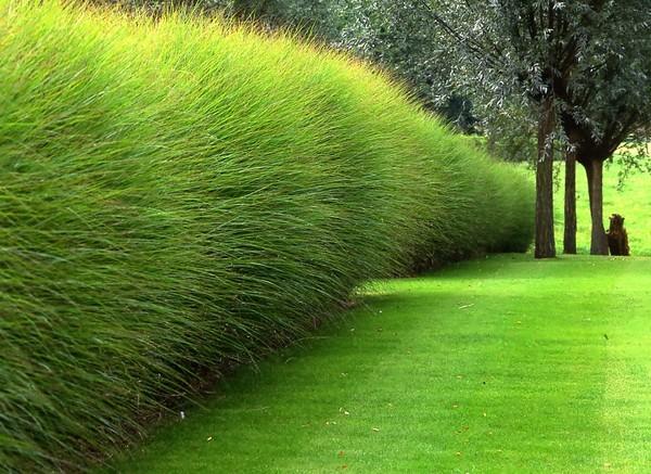 Voisinage arbres en limite de propri t habitatpresto - Arbre trentenaire en limite de propriete ...