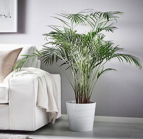 ikea-plante