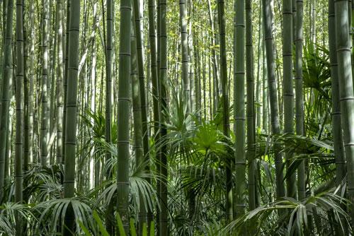 jardin-bambou