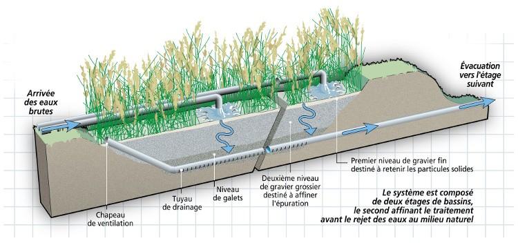Assainissement cologique le filtre plant habitatpresto Drainage terrain argileux maison