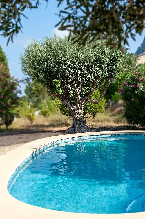 ombre_jardin_arbre2
