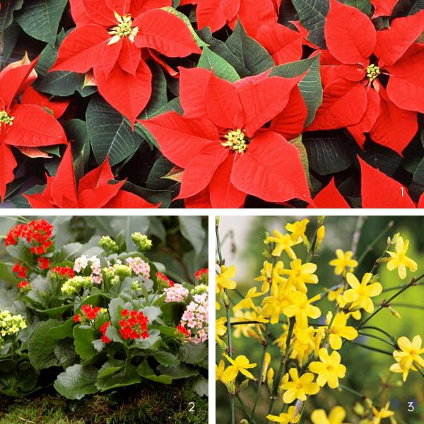 Plantes jardin d'hiver