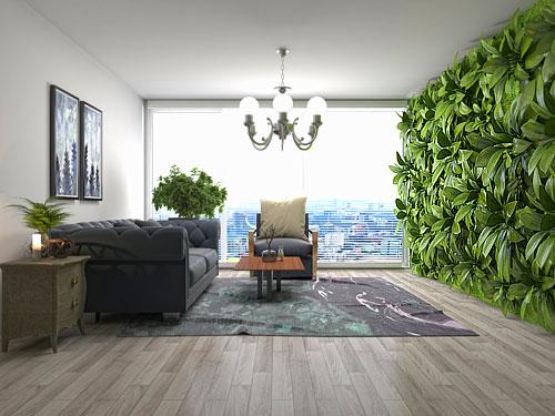 plantes_mur