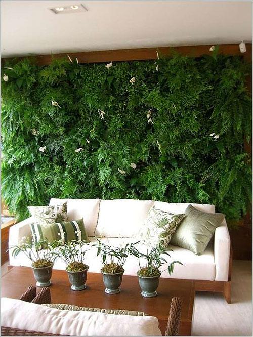 plantes_mur1
