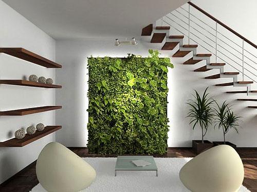 plantes_mur2