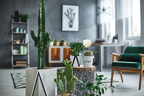 plantes_salon2