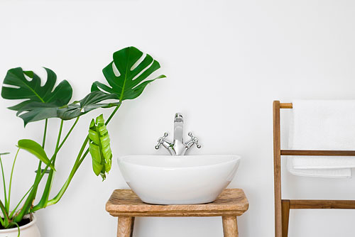 plantes_sdb2