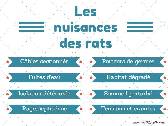 Comment identifier et se d barrasser des rats habitatpresto - Comment se debarrasser des rats ...