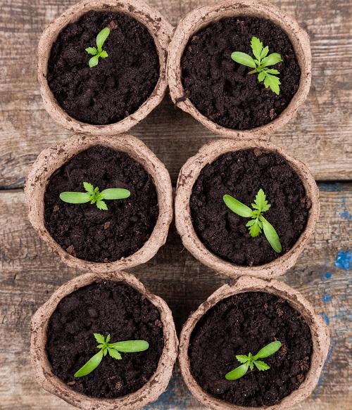 Pots de plante