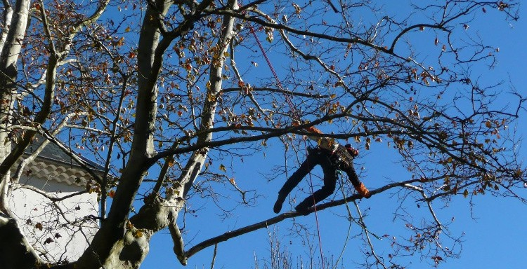 propriétaire : les règles d'abattage des arbres | habitatpresto