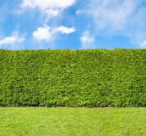 Comment installer une clôture électrique dans son jardin ?