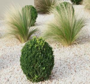 Aménager un jardin minéral et zen | Habitatpresto