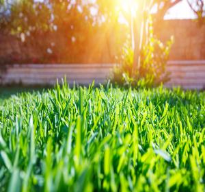 le gazon sport l alli des pelouses sollicit es habitatpresto. Black Bedroom Furniture Sets. Home Design Ideas