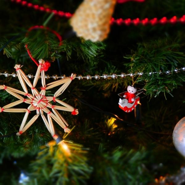 Comment bien choisir son sapin de Noël ?