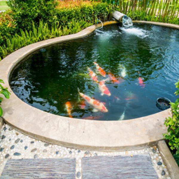 Bassin de jardin : prix et difficulté de réalisation | Habitatpresto