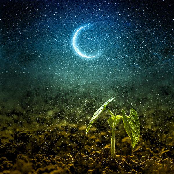 Calendrier Avec Les Lunes.Comment Jardiner Avec La Lune Le Calendrier Lunaire De 2019