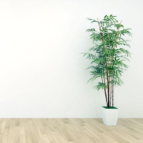 Plantes D Interieur Les Meilleures Inspirations Deco