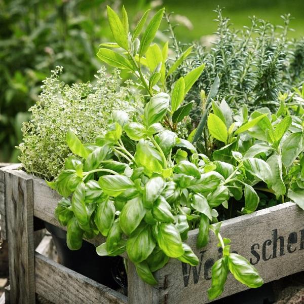 Top 10 Des Jardinieres Design Pour Votre Balcon Et Jardin