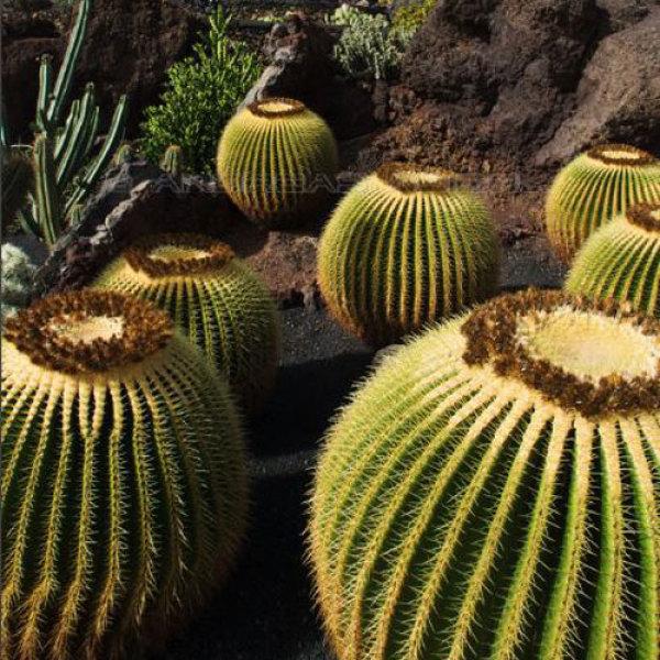 Top 5 des plus beaux jardins du monde qui vont vous inspirer