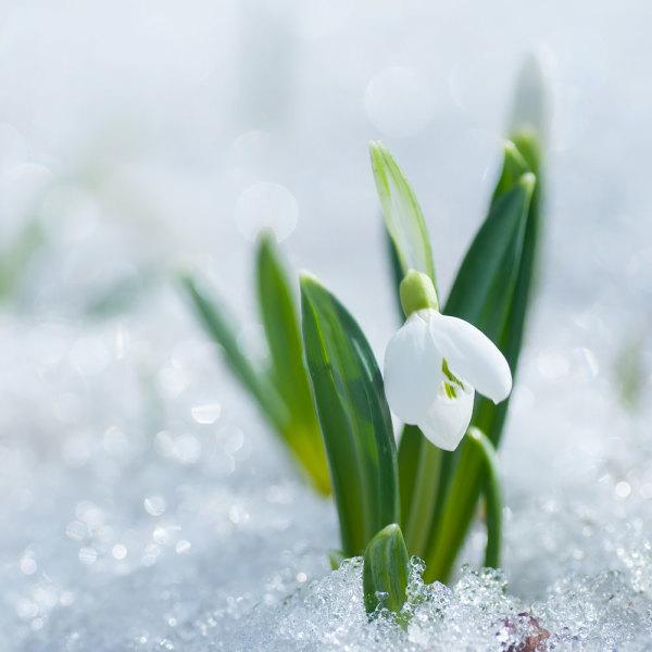 5 Plantes et fleurs qui fleurissent l\'hiver au jardin