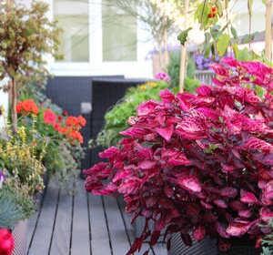 am nager un jardin min ral et zen. Black Bedroom Furniture Sets. Home Design Ideas