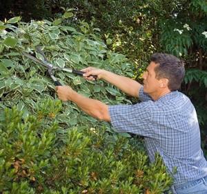 Elagage des arbres un entretien obligatoire for Reglementation elagage des arbres